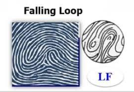 Hình dạng của Chủng vân tay hiếm FL (Falling Loop) NGỌC VIỆT